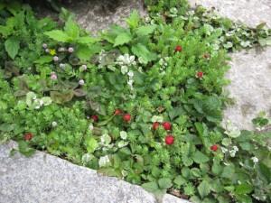 8-201205 地表を覆う植物