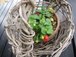 8-201205 蔓籠と苺