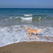 ①20140408松崎邸 海と犬
