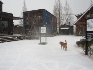 20160124 雪の展示場